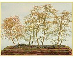 Alberi in filigrana Pacco-Piccolo +/- 8 alberi ( Er Decor - ER.2000 )